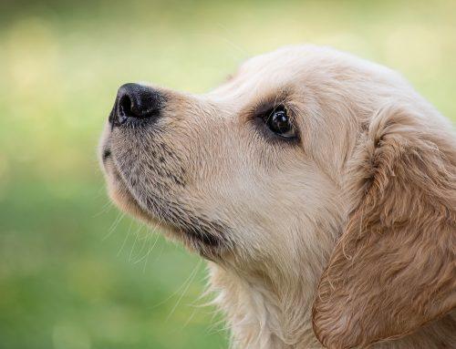 Rettungshund werden